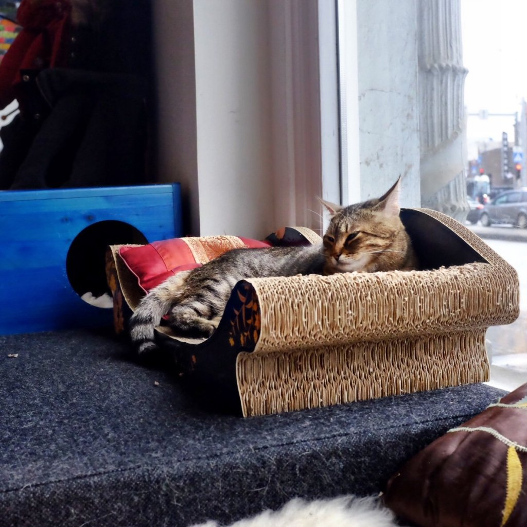 Cat bed in the cat cafe in Tallinn