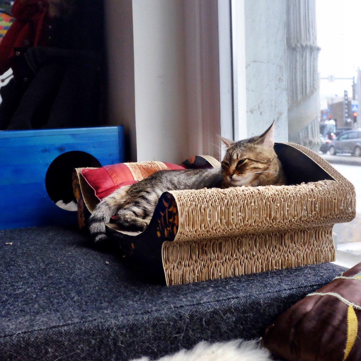Cat bed in the cat cafe in Tallinn
