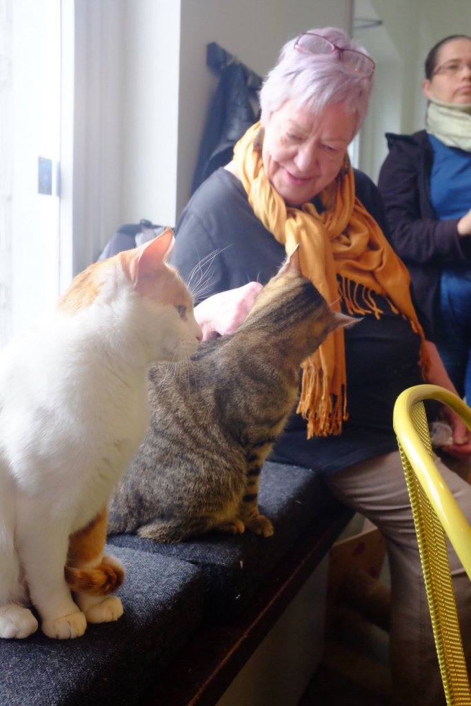 A elderly lady talking to two cats in the cat cafe in Tallinn