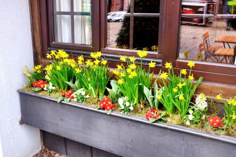 Flowers in Freiburg
