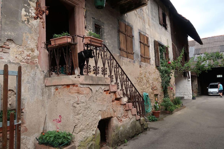 Alsace wine route village