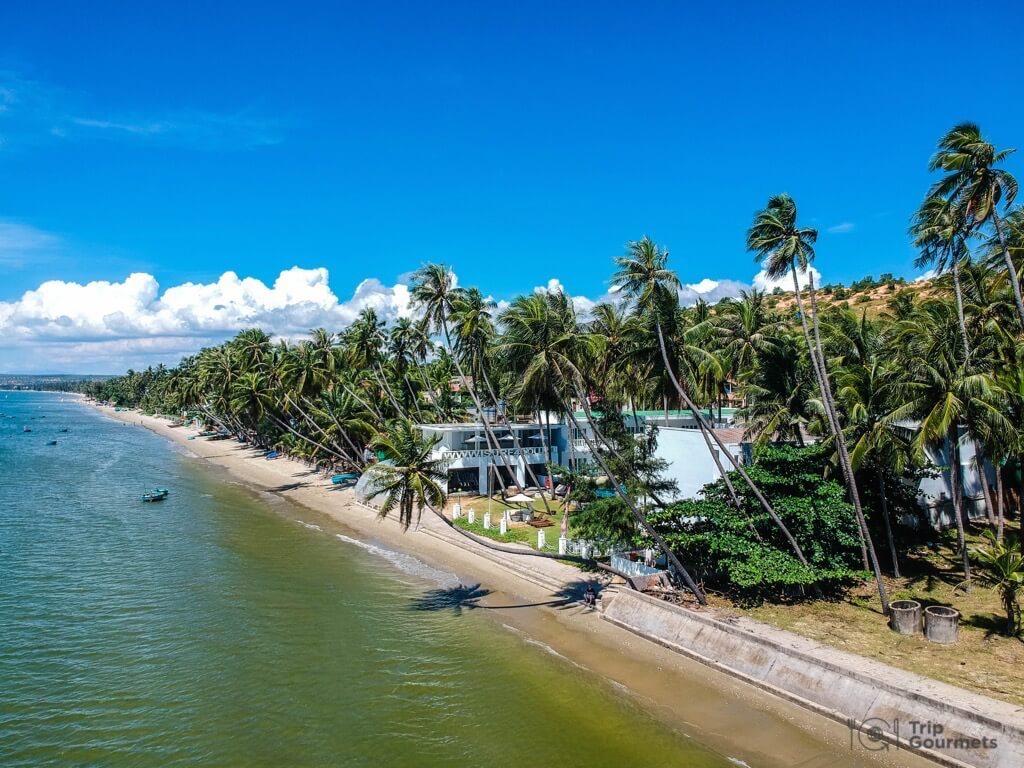 Things to do in Mui Ne Muine beach palms