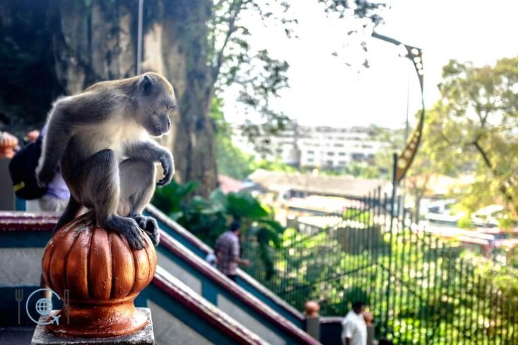Kuala Lumpur Itinerary Batu Caves Monkey