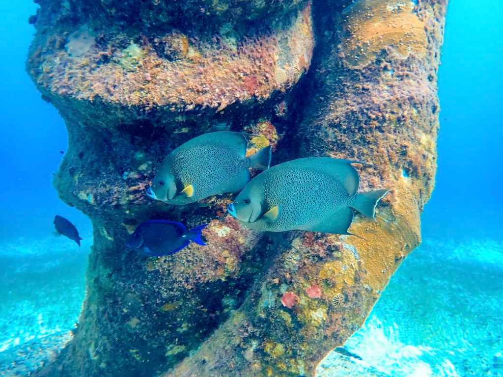 Scuba diving in Playa del Carmen - Statue and Fish