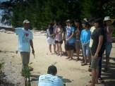 mangrove time06