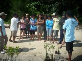 mangrove time08