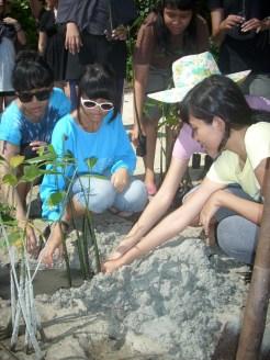 mangrove time10