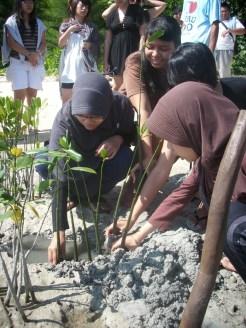 mangrove time11
