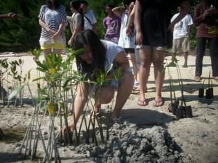 mangrove time12