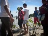 menanam mangrove02