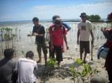 menanam mangrove03