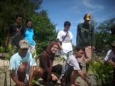 menanam mangrove07
