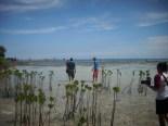 menanam mangrove10