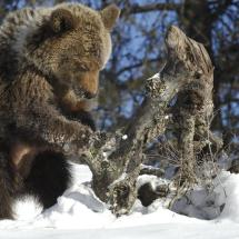 Grizzly Bear Business