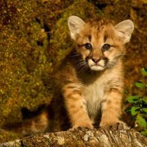 Kitten at TripleD