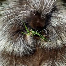 Porcupine ~ TripleD
