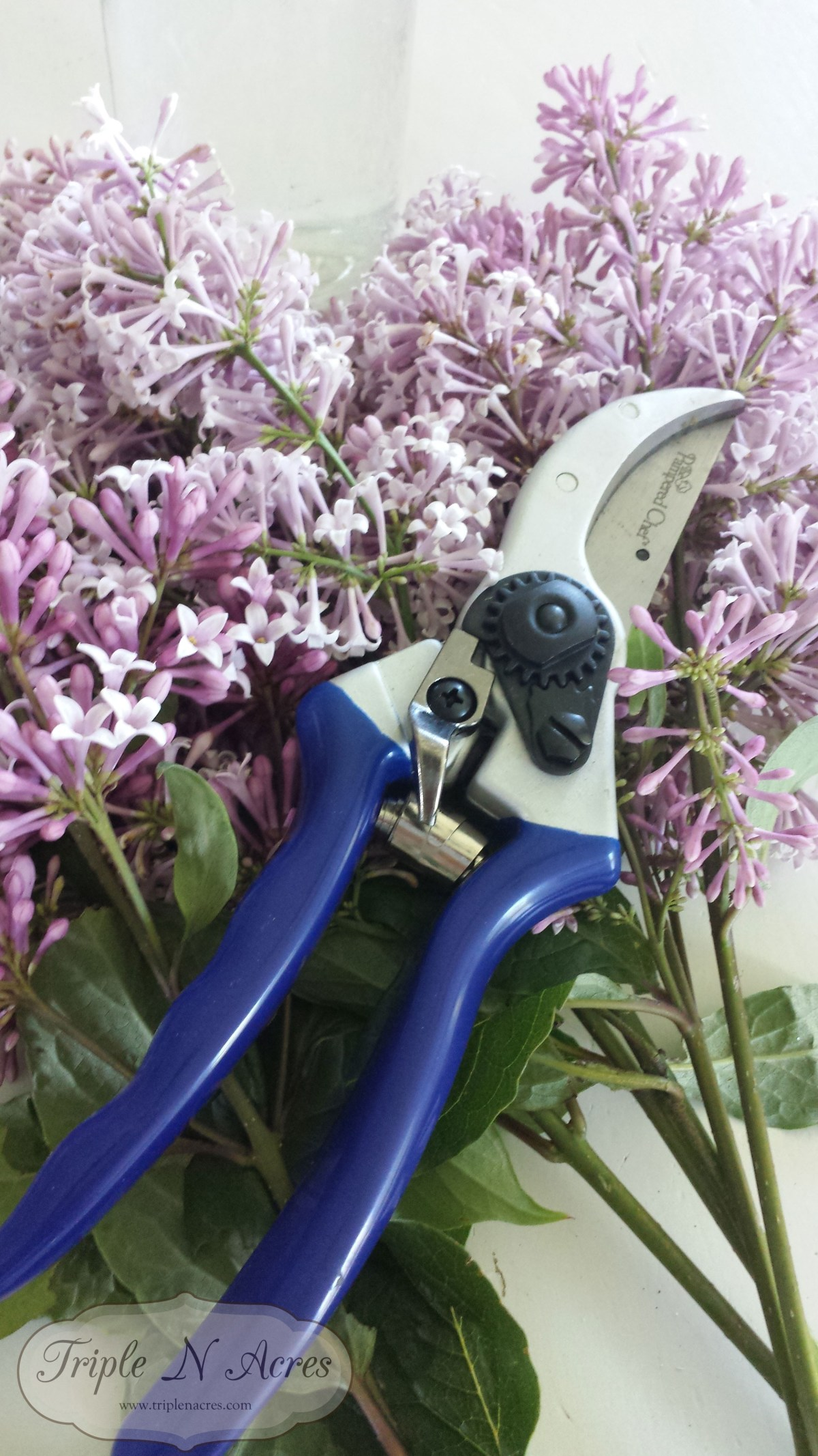 Tool of the day: pruning shears