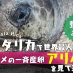 【松竹芸人が突撃】悪魔降臨!?コスタリカで世界最大規模のウミガメの産卵がヤバイ。の画像