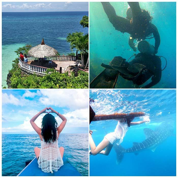 宿霧跳島, 浮潛, 潛水, 鯨鯊, 與鯨共游, 度假遊學