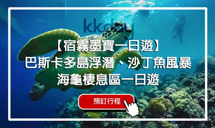 宿霧墨寶看海龜, 沙丁魚風暴, 跟海龜潛水