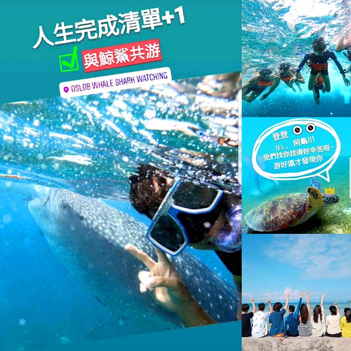 宿霧夢想清單, 歐斯陸與鯨鯊共游, 海龜, 墨寶旅行