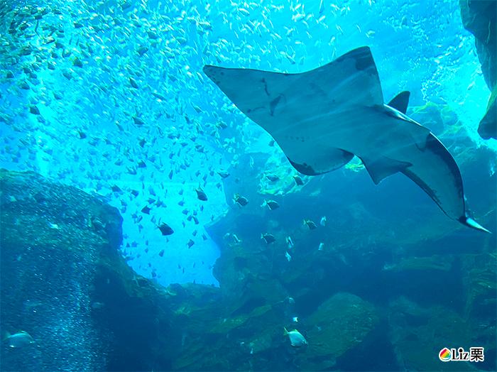 xpark鯊魚