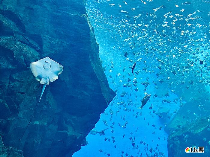 xpark微笑缸魚,海底世界,水族館