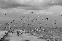 Baltic2016_Nida_102