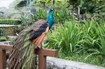 TripLovers_Malaysia_KL_031_KL-Bird-Park