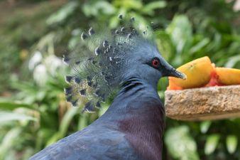 TripLovers_Malaysia_KL_050_KL-Bird-Park