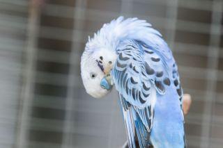 TripLovers_Malaysia_KL_060_KL-Bird-Park