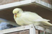 TripLovers_Malaysia_KL_063_KL-Bird-Park