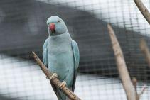 TripLovers_Malaysia_KL_070_KL-Bird-Park