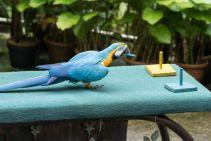 TripLovers_Malaysia_KL_086_KL-Bird-Park