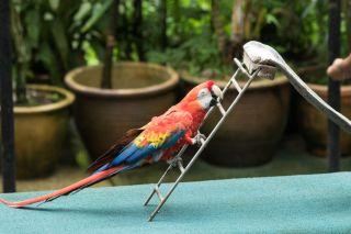 TripLovers_Malaysia_KL_089_KL-Bird-Park
