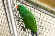 TripLovers_Malaysia_KL_103_KL-Bird-Park
