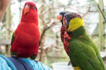 TripLovers_Malaysia_KL_115_KL-Bird-Park