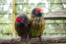 TripLovers_Malaysia_KL_127_KL-Bird-Park