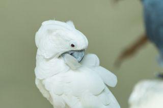 TripLovers_Malaysia_KL_141_KL-Bird-Park
