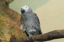 TripLovers_Malaysia_KL_142_KL-Bird-Park