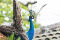 TripLovers_Malaysia_KL_146_KL-Bird-Park