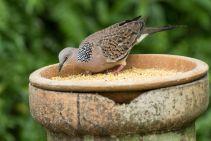 TripLovers_Malaysia_KL_167_KL-Bird-Park