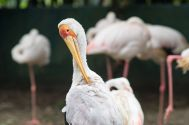 TripLovers_Malaysia_KL_174_KL-Bird-Park