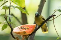 TripLovers_Malaysia_KL_180_KL-Bird-Park