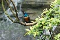 TripLovers_Malaysia_KL_181_KL-Bird-Park