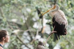 TripLovers_Malaysia_KL_182_KL-Bird-Park