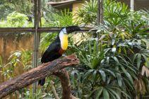 TripLovers_Malaysia_KL_192_KL-Bird-Park