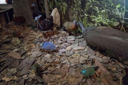 TripLovers_Malaysia_KotaKinabalu_069_SabahMuseum