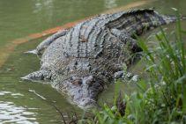 TripLovers_Malaysia_KotaKinabalu_148_TuaranCrocodileFarm