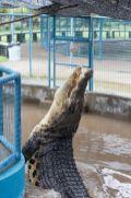 TripLovers_Malaysia_KotaKinabalu_155_TuaranCrocodileFarm